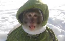 arctic_monkey