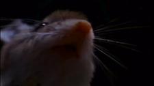 howlin_mouse