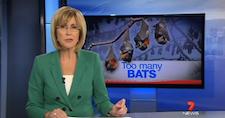 too_many_bats
