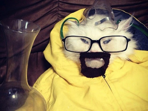 walter_white_cat