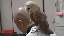 owl_typing