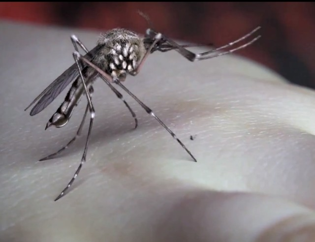 "Yeah Yeah Yeahs - ""Mosquito"" video"