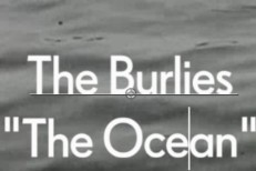The Burlies