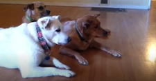 A Vine About Dogs