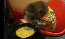 Monkey Eating Soup