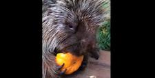 pumpkin_chomp