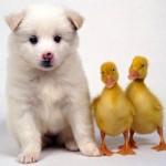 Favorite Animal Videos Of 2013