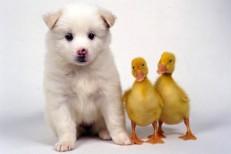 animals_2013