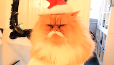 cat_grumpy