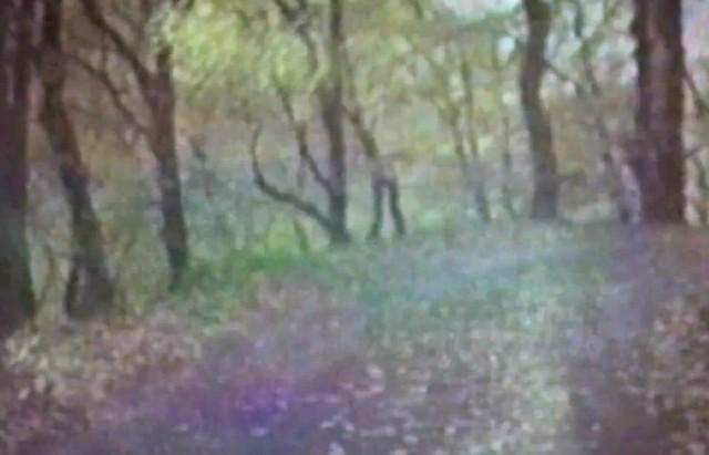 "Bibio – ""Dye The Water Green"" Video - Stereogum"