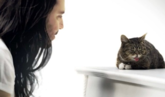 "Andrew W.K. & Lil BUB - ""Star Party Animal"" video"