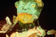 """Born Ruffians – """"Oceans Deep"""" Video"""