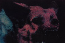 Protomartyr - Under Color Of Official Right