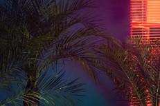 Scarlet Pleasure - Under The Palmtrees
