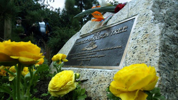 George Harrison Memorial Tree Killed By Actual Beetles