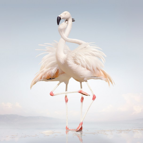 "Rustie – ""Attak"" (Feat. Danny Brown)"