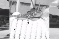 "18+ – ""Crow"" Video"