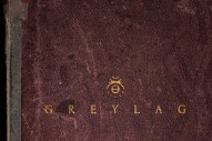 Stream Greylag <em>Greylag</em>