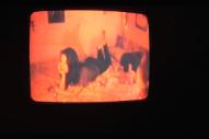 "Mitski – ""Townie"" Video"