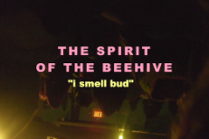 """The Spirit Of The Beehive - """"I Smell Bud"""" Video (Stereogum Premiere)"""