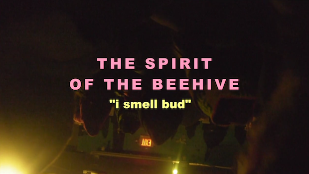 """The Spirit Of The Beehive – """"I Smell Bud"""" Video (Stereogum"""