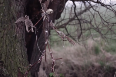 Bonnie Prince Billy Gloria Video
