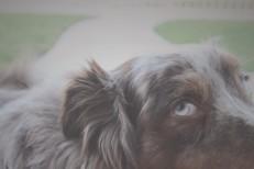 Stream Alexei Shishkin <em>The Dog Tape</em> (Stereogum Premiere)