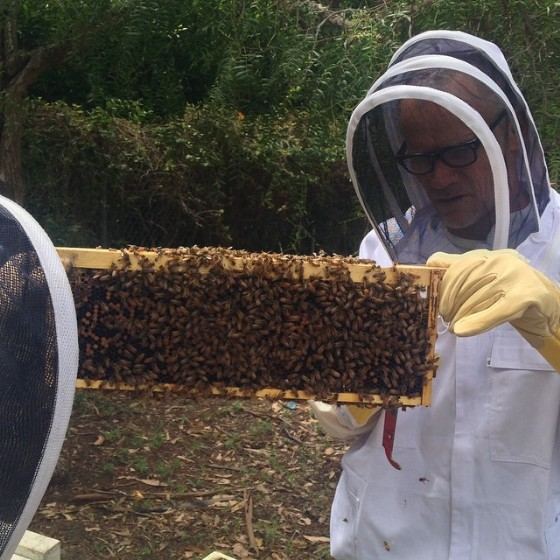 Flea Is A Beekeeper Now