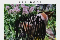 All Dogs - Kicking Every Day