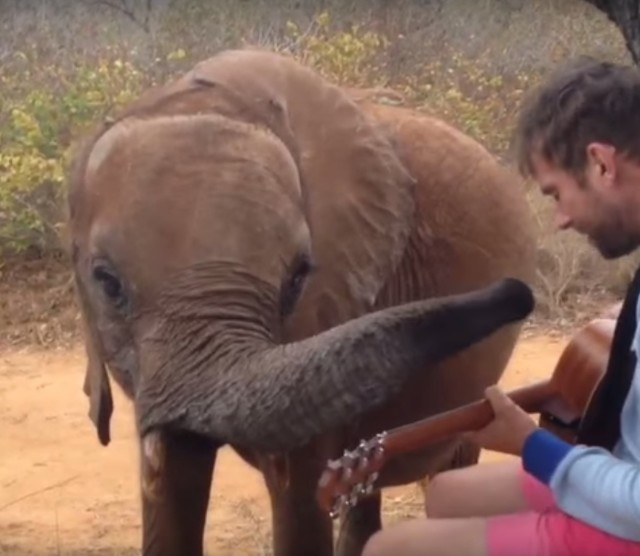 Damon Albarn and Mr Tembo