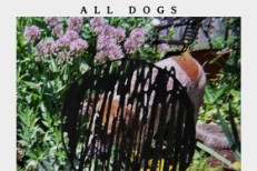 All Dogs -