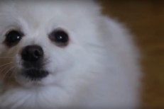 Aphex Twin dog