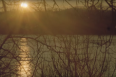 "Bonnie ""Prince"" Billy – ""When Thy Song Flows Through Me"" Video"