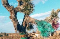 "Beth Orton Removes ""1973"" Video With Spray-Painted Joshua Tree"
