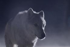 """The Kills – """"Siberian Nights"""" Video"""