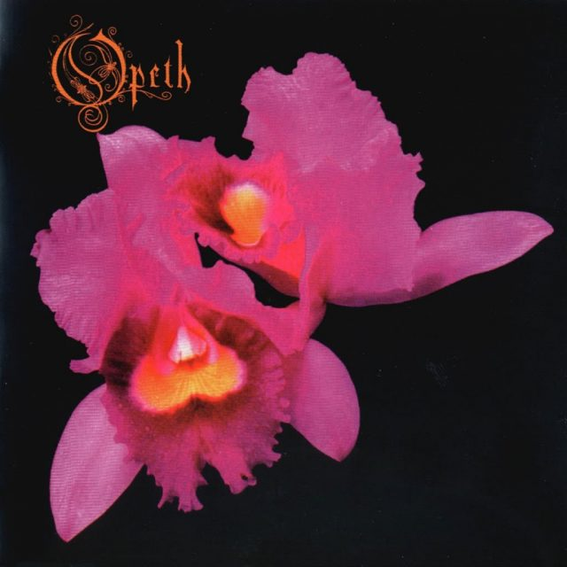 02_orchid