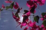 "Papa M – ""Bloom"" Video"