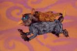 """Wilco – """"Someone To Lose"""" Video"""