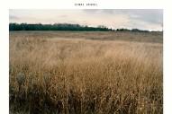 "Sinai Vessel – ""Dogs"""