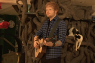 Ed Sheeran Wax Figure Unveiled At Cat Cafe For Some Reason