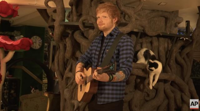 ed-sheeran-cat