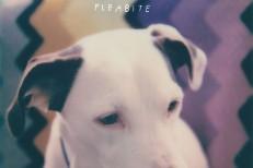 Fleabite NVM EP