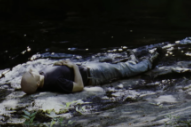 "Devon Welsh – ""By The Daylight"" Video"