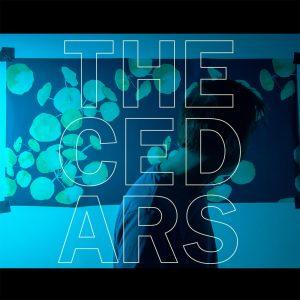 John Vanderslice - The Cedars