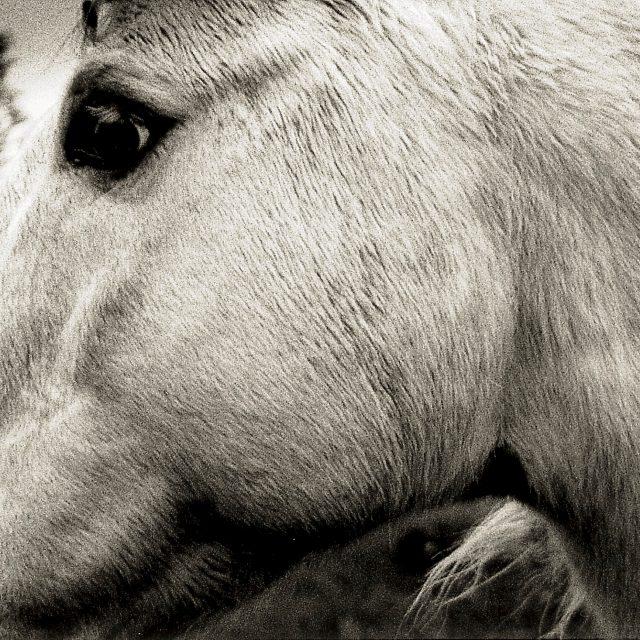 Bonny Light Horseman Announce Debut Album Hear Deep In Love Stereogum