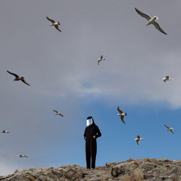 "Hamerkop – ""We Can Wing"""