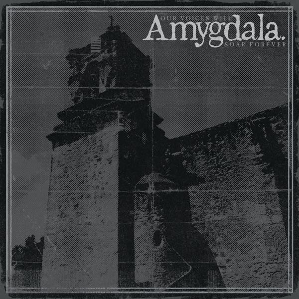 amygdala-our-voices-1574704692